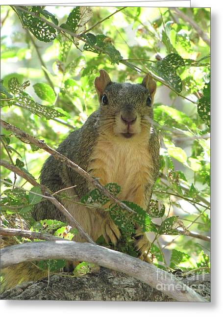On Alert Greeting Card by Michelle H