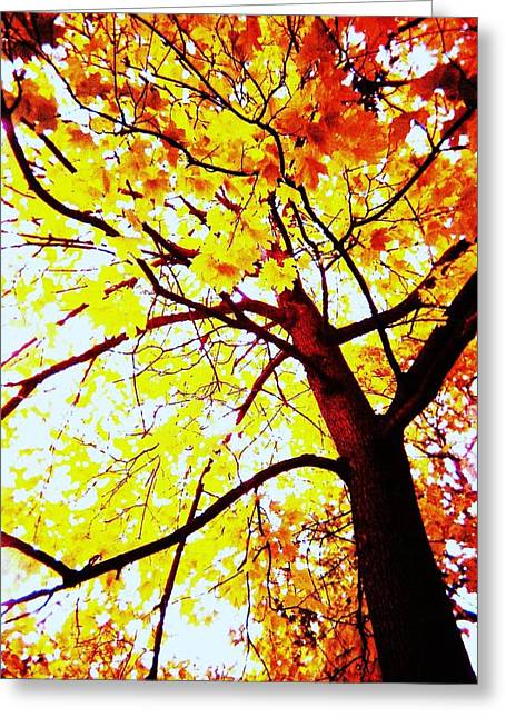 On Fire Greeting Card by Todd Sherlock
