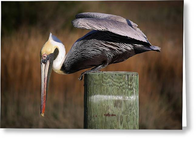 On The Edge Greeting Card by Paulette Thomas