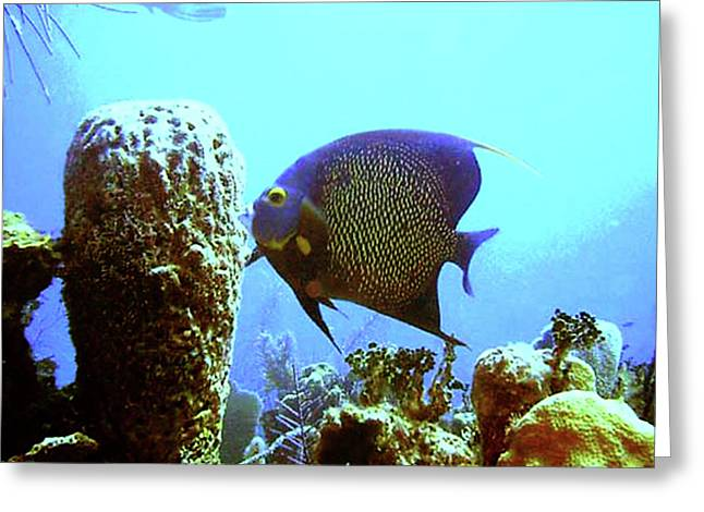 On The Reef Greeting Card by Barry Jones