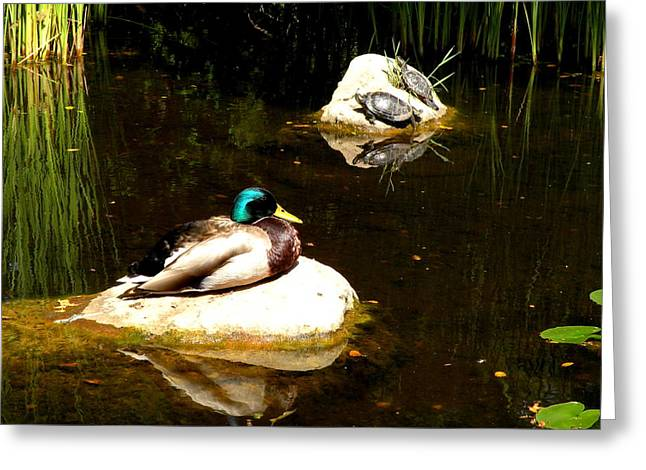 On The Rocks Greeting Card by Andrea Cullinane