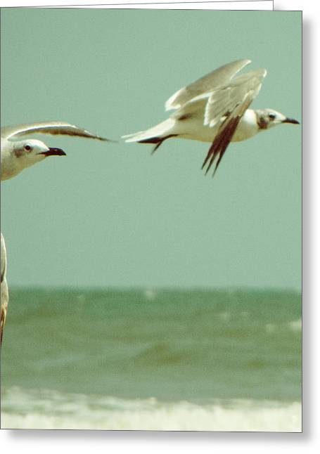 On The Wings Of A Seagull Greeting Card