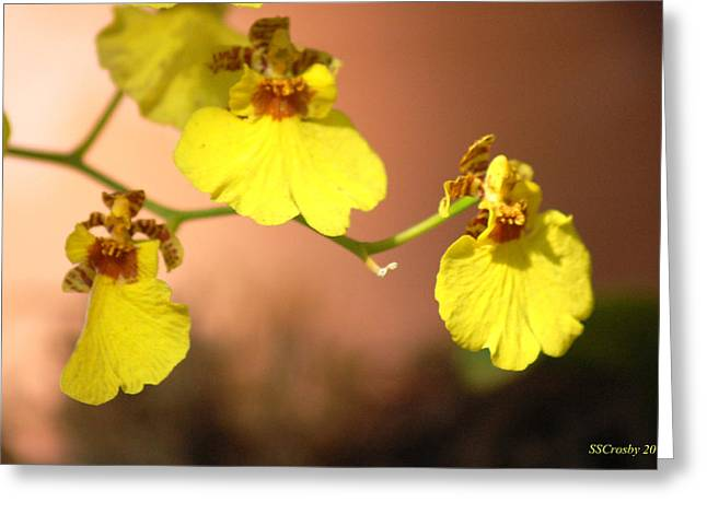 Oncidium Goldiana Orchid Greeting Card