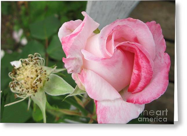 One Arriving And One Leaving Greeting Card by Sandra Maddox
