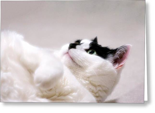 Greeting Card featuring the photograph One Belly Rub Please by JM Photography