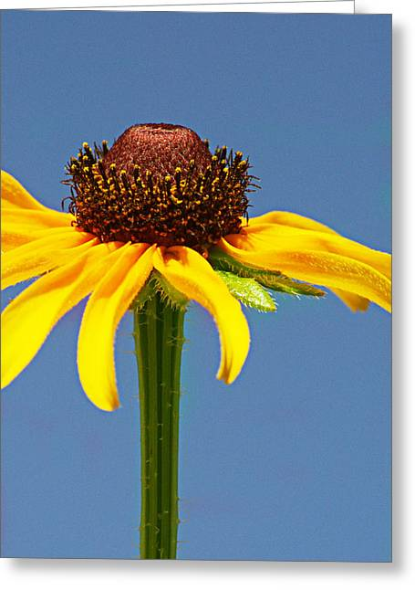 One Lone Flower Greeting Card by Michelle Armstrong