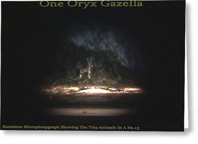 One Oryx Gazella  Greeting Card by Phillip H George