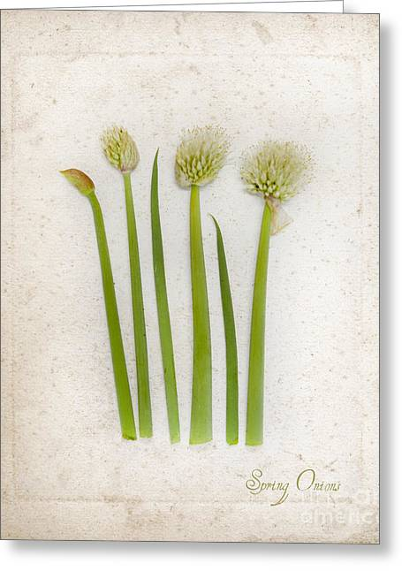 Onion Art Greeting Card by Linde Townsend