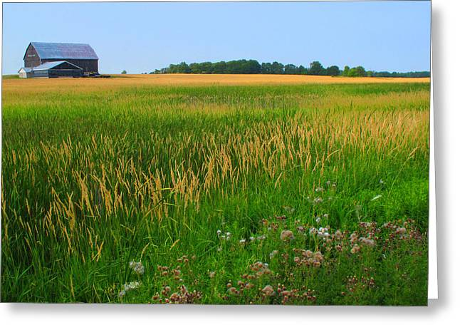 Ontario Farm  Greeting Card by Lyle Crump