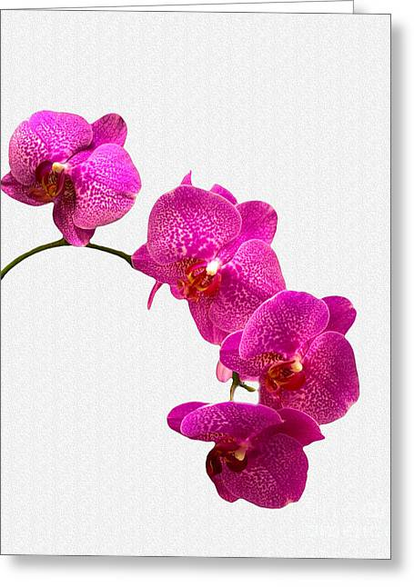 Greeting Card featuring the photograph Oodles Of Purple Orchids by Michael Waters
