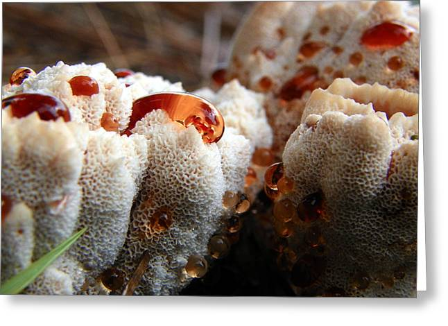 Oozing Fungus Greeting Card by Chad and Stacey Hall