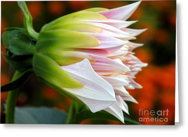 Open For Autumn Greeting Card by Christine Belt