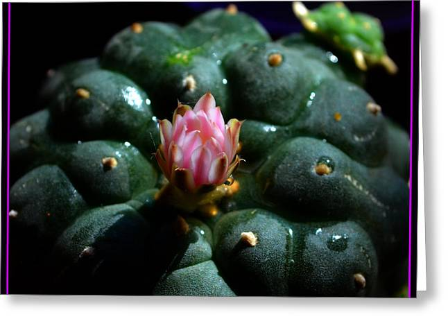 Opening Peyote Flower Greeting Card