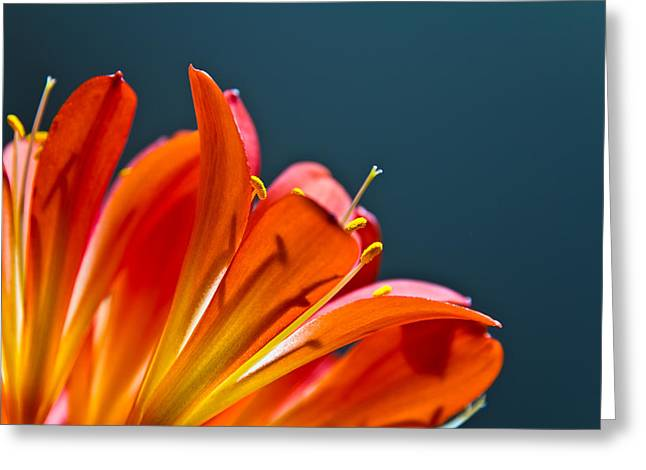 Orange And Blue Greeting Card by Justin Albrecht