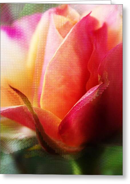 Orange And Pink Rose Abstract Greeting Card by Robin Cox