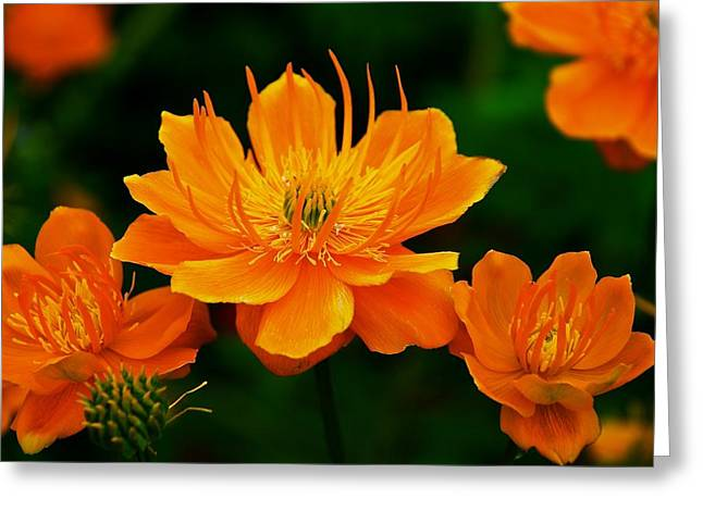 Orange And Yellow Greeting Card by Eric Tressler