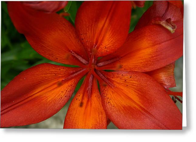 Greeting Card featuring the painting Orange Beauty by Dolores  Deal