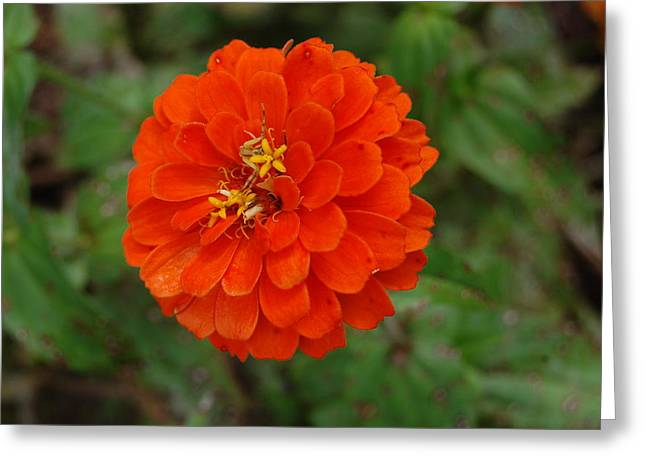 Orange Greeting Card by Beverly Hammond