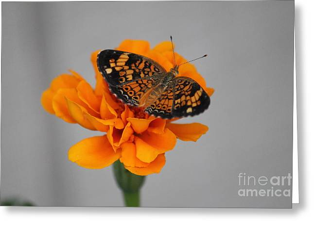 Orange Butterfly 2 Greeting Card
