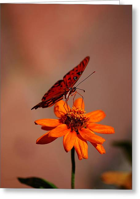 Orange Butterfly Orange Flower Greeting Card by Lori Tambakis