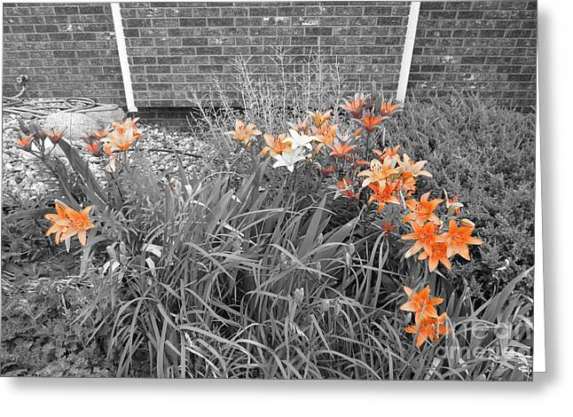 Orange Day Lilies. Greeting Card