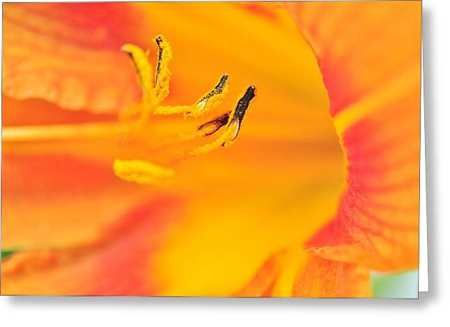 Greeting Card featuring the photograph Orange Daylily  by Puzzles Shum