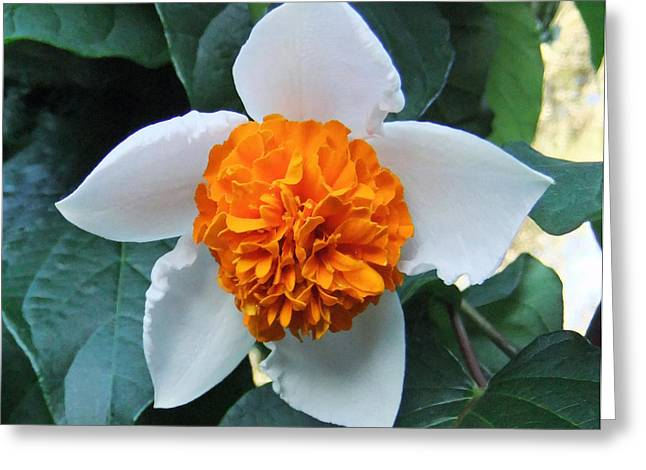 Orange Delight Greeting Card by Eric Kempson