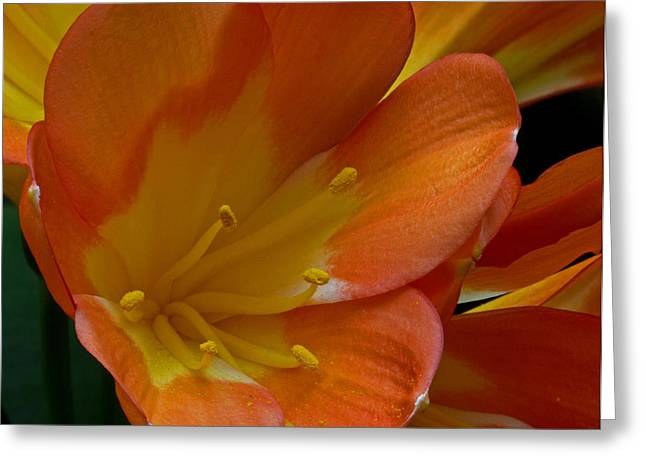 Orange Delight Greeting Card