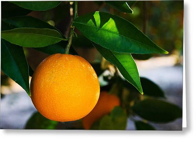 Orange Greeting Card by Dorothy Cunningham