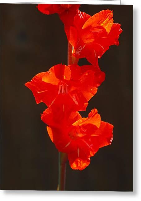 Orange Fire Greeting Card by Jim Moore
