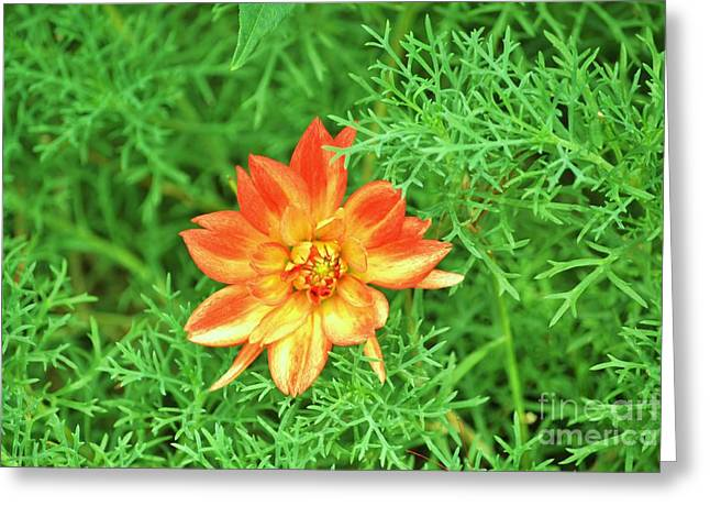 Orange Flower Greeting Card by Artie Wallace