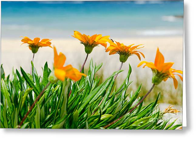 Orange Flowers On The Sunny Ocean Beach. Greeting Card