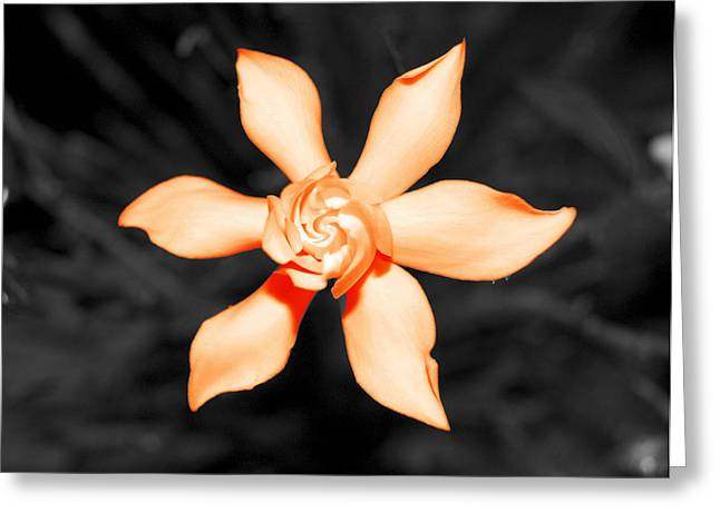 Orange Gardenia Bonsai Greeting Card by Adam Hopke