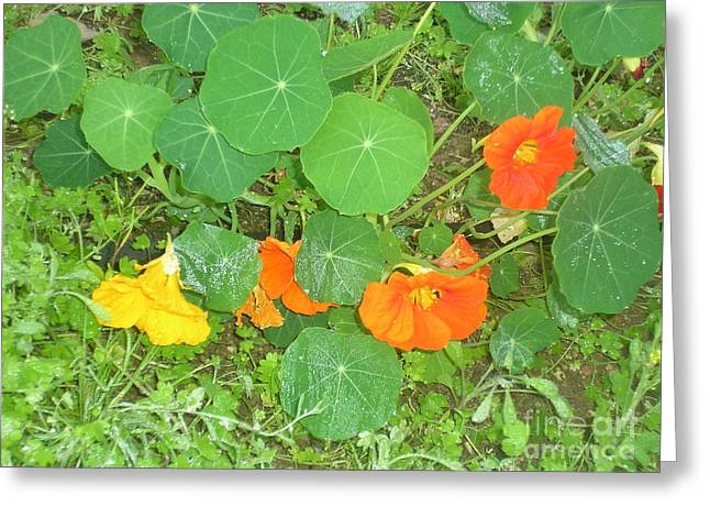Orange Ivy Greeting Card