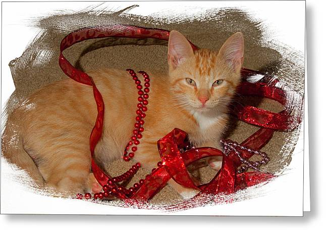 Orange Kitten With Red Ribbon Greeting Card by Judy Deist
