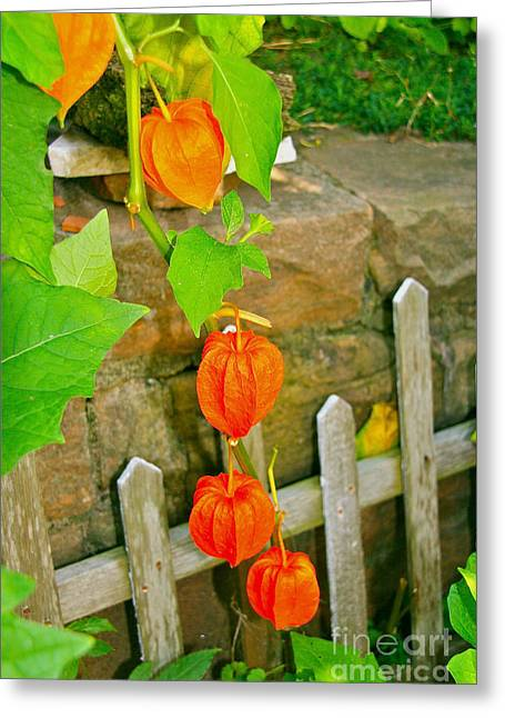 Orange Lanterns Greeting Card by Joan McArthur