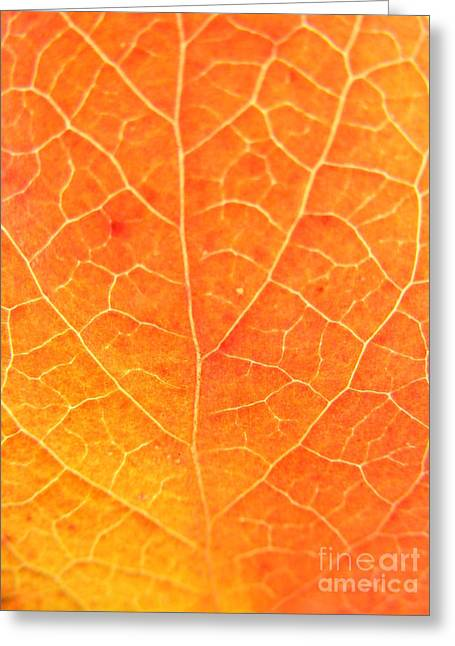 Orange Leaf Abstract Greeting Card by Mariah Stone