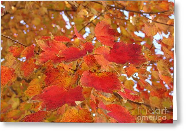 Orange Leaves 4 Greeting Card by Rod Ismay