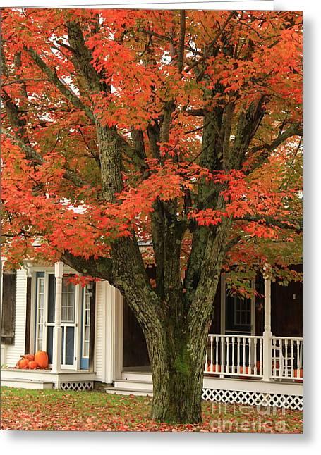 Orange Leaves And Pumpkins Greeting Card by Deborah Benoit