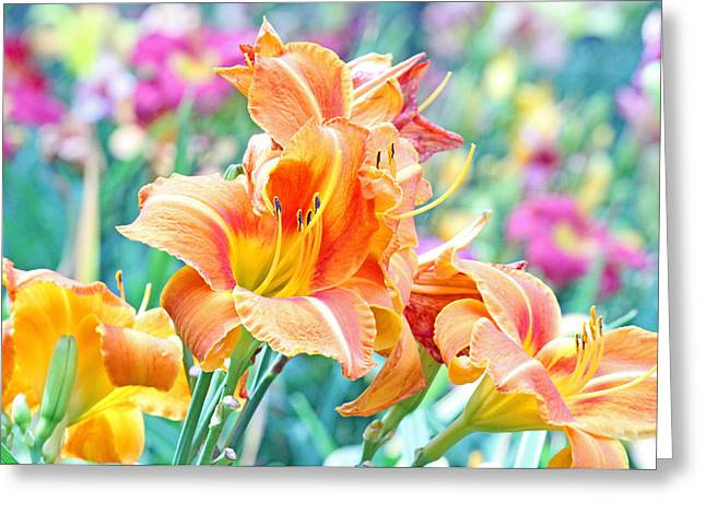 Orange Lilies Greeting Card by Becky Lodes