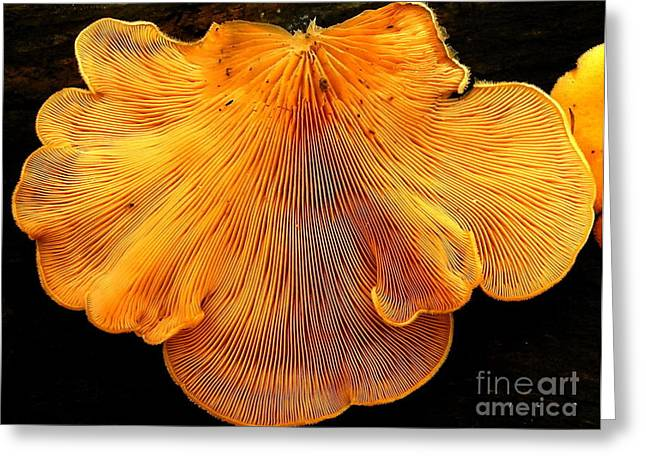 Orange Mock Oyster Greeting Card