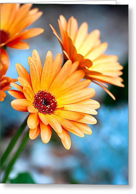 Greeting Card featuring the photograph Orange Mood by Anna Rumiantseva