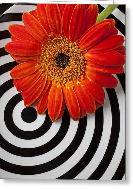 Orange Mum With Circles Greeting Card by Garry Gay