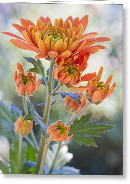 Orange Mums Greeting Card by Heidi Smith