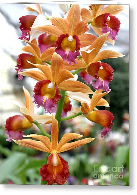 Greeting Card featuring the photograph Orange Orchids by Debbie Hart