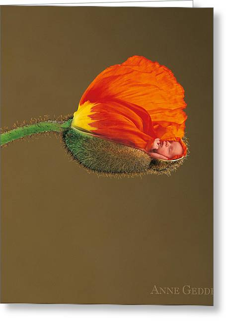 Down Photographs Greeting Cards - Orange Poppy Greeting Card by Anne Geddes