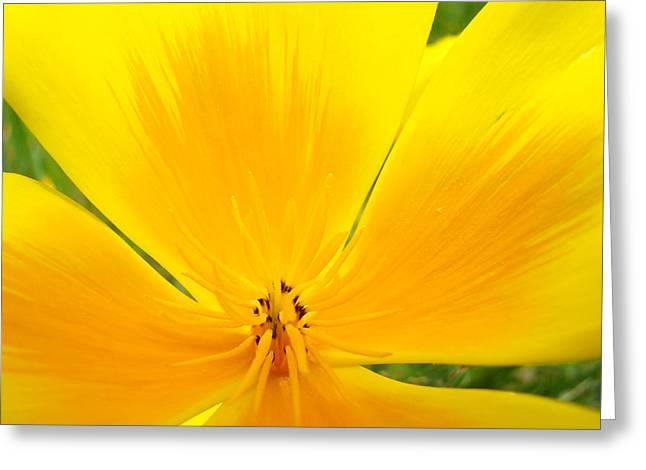 Orange Poppy Flower Art Prints Poppies Giclee Greeting Card by Baslee Troutman