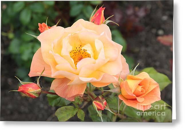 Orange Roses In Oslo Greeting Card