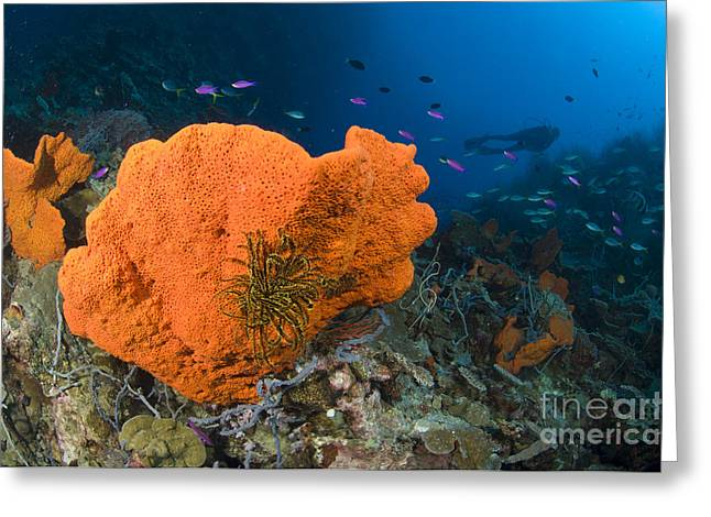 Orange Sponge With Crinoid Attached Greeting Card by Steve Jones