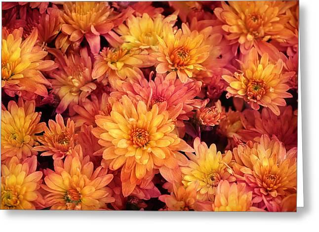 Orange Spring Flowers Background Greeting Card by Angela Waye